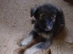 puppy0122